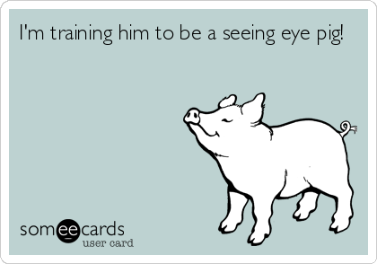 I'm training him to be a seeing eye pig!