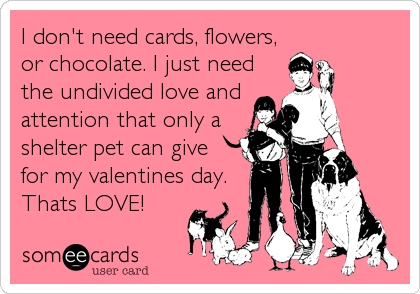 I don't need cards, flowers, or chocolate. I just need the undivided love and attention that only a shelter pet can give for my valentines day.<