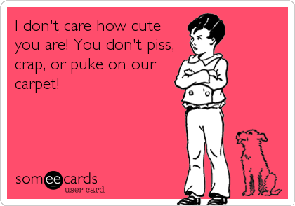 I don't care how cute you are! You don't piss, crap, or puke on our carpet!