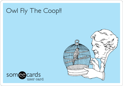 Owl Fly The Coop!!