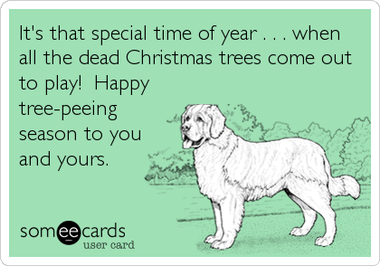 It's that special time of year . . . when all the dead Christmas trees come out to play!  Happy tree-peeing season to you and yours.