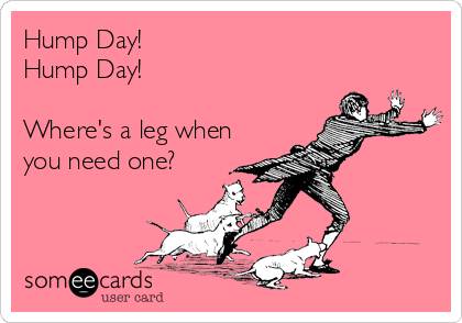 Hump Day! Hump Day!  Where's a leg when you need one?