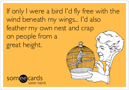 If only I were a bird I'd fly free with the wind beneath my wings... I'd also feather my own nest and crap on people from a great height.