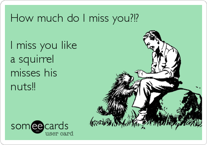 How Much Do I Miss You I Miss You Like A Squirrel Misses His Nuts