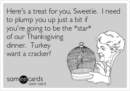 Here's a treat for you, Sweetie.  I need to plump you up just a bit if you're going to be the *star* of our Thanksgiving dinner.  Turkey want a cracker?