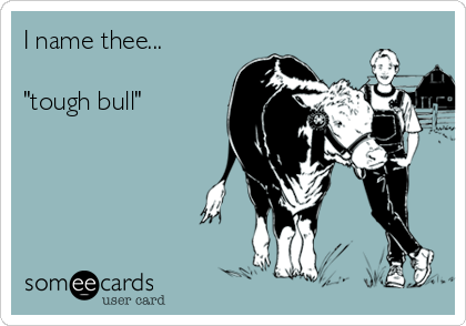 "I name thee...  ""tough bull"""