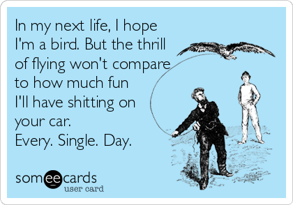 In my next life, I hope I'm a bird. But the thrill of flying won't compare to how much fun I'll have shitting on your car.  Every. Single. Day.