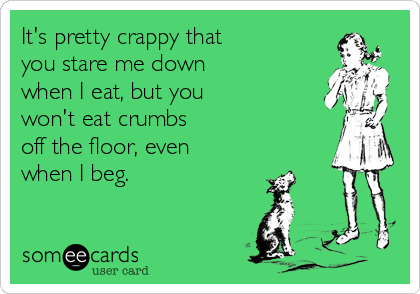 It's pretty crappy that  you stare me down  when I eat, but you  won't eat crumbs  off the floor, even  when I beg.