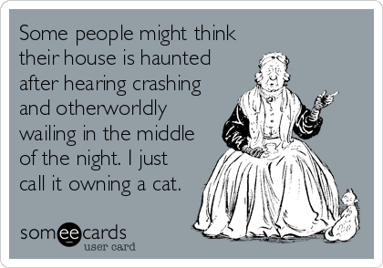 Some people might think their house is haunted after hearing crashing and otherworldly wailing in the middle of the night. I just call it own
