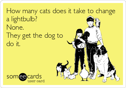 How many cats does it take to change a lightbulb? None. They get the dog to do it.