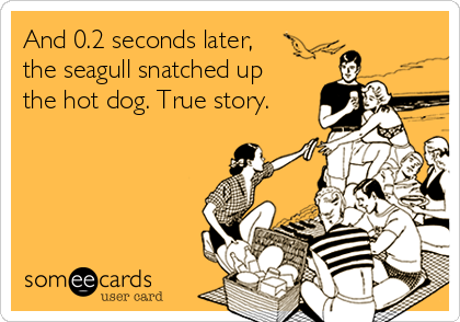 And 0.2 seconds later,  the seagull snatched up  the hot dog. True story.