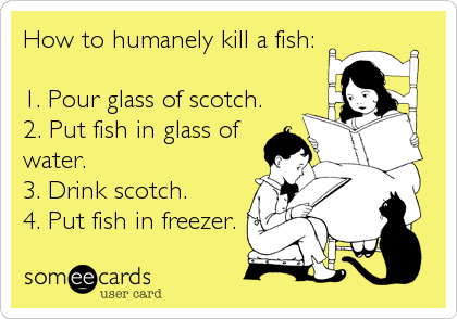 How to humanely kill a fish:  1. Pour glass of scotch. 2. Put fish in glass of water. 3. Drink scotch. 4. Put fish in freezer.