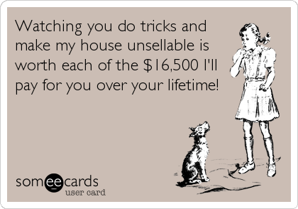 Watching you do tricks and make my house unsellable is worth each of the $16,500 I'll pay for you over your lifetime!