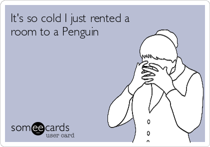 It's so cold I just rented a room to a Penguin