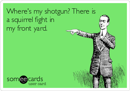 Where's my shotgun? There is a squirrel fight in my front yard.