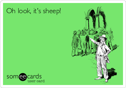 Oh look, it's sheep!