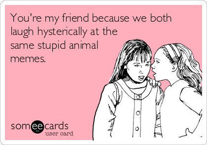 You're my friend because we both laugh hysterically at the same stupid animal memes.