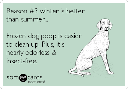 Reason #3 winter is better than summer...  Frozen dog poop is easier to clean up. Plus, it's nearly odorless & insect-free.