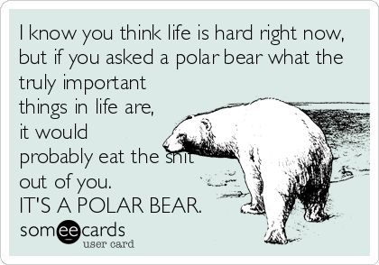 I know you think life is hard right now, but if you asked a polar bear what the truly important things in life are, it would probably eat the shit out of you.  IT'S A POLAR BEAR.