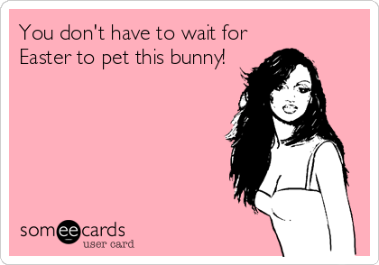 You don't have to wait for Easter to pet this bunny!