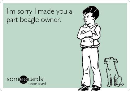I'm sorry I made you a part beagle owner.