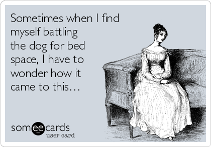 Sometimes when I find  myself battling  the dog for bed space, I have to wonder how it came to this…