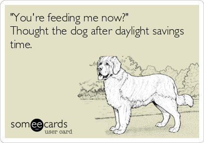 """""""You're feeding me now?""""  Thought the dog after daylight savings time."""