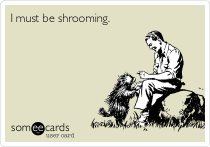 I must be shrooming.
