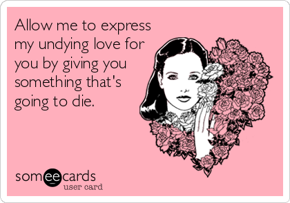 Allow me to express my undying love for you by giving you something that's going to die.