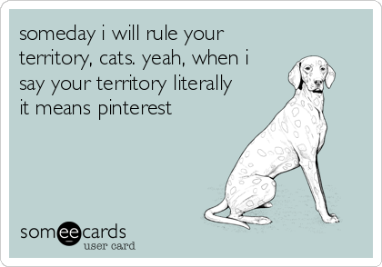 someday i will rule your territory, cats. yeah, when i  say your territory literally it means pinterest