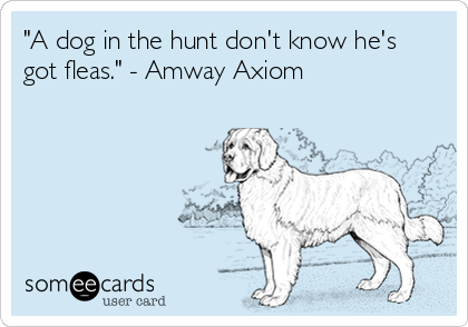 """""""A dog in the hunt don't know he's got fleas."""" - Amway Axiom"""