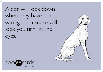 A dog will look down when they have done wrong but a snake will look you right in the eyes.