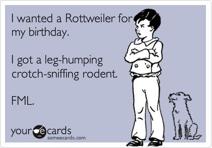 I wanted a Rottweiler for my birthday.  I got a leg-humping crotch-sniffing rodent.   FML.