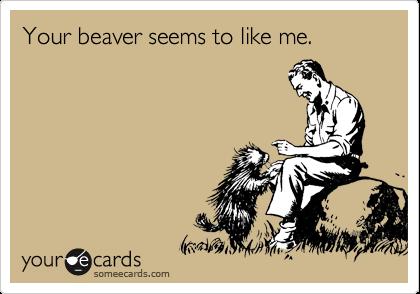 Your beaver seems to like me.