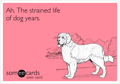 Ah. The strained life  of dog years.