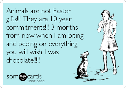 Animals are not easter gifts they are 10 year commitments 3 animals are not easter gifts they are 10 year commitments negle Images