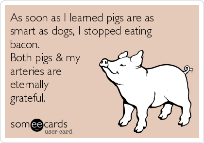 As soon as I learned pigs are as smart as dogs, I stopped eating bacon. Both pigs & my arteries are  eternally grateful.