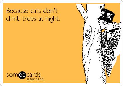 Because cats don't climb trees at night.