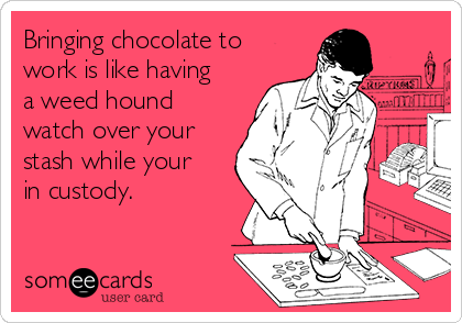Bringing chocolate to work is like having a weed hound watch over your stash while your in custody.