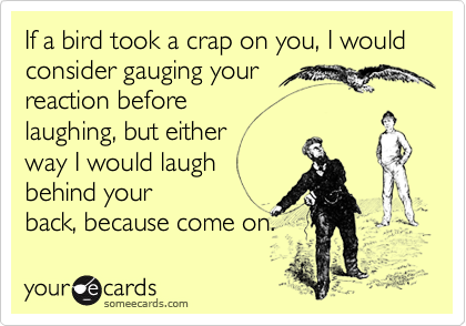If a bird took a crap on you, I would consider gauging yourreaction before laughing, but either way I would laugh behind yourback, because come on.
