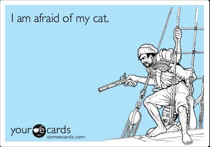 I am afraid of my cat.