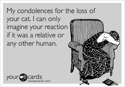 My condolences for the loss of your cat. I can onlyimagine your reactionif it was a relative orany other human.