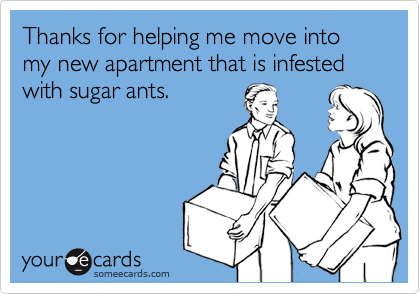 Thanks for helping me move into my new apartment that is infested with sugar ants.