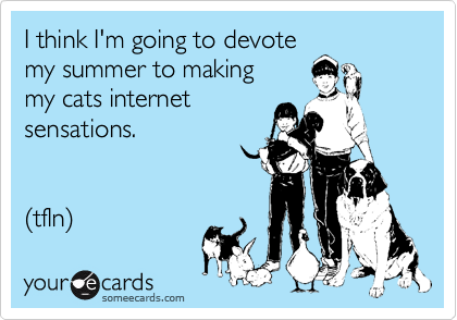 I think I'm going to devote my summer to making  my cats internet sensations.   (tfln)