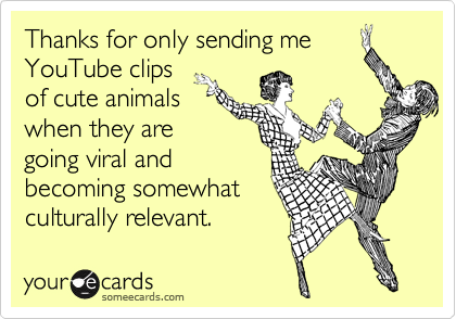 Thanks for only sending me YouTube clips of cute animals when they are going viral and becoming somewhat culturally relevant.
