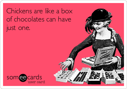 Chickens are like a box of chocolates can have just one.