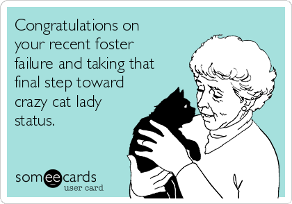 Congratulations on your recent foster failure and taking that final step toward crazy cat lady status.