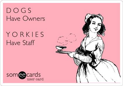 D O G S Have Owners  Y O R K I E S Have Staff