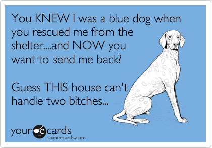 You KNEW I was a blue dog when you rescued me from the shelter....and NOW you want to send me back?  Guess THIS house can't handle two bitches...