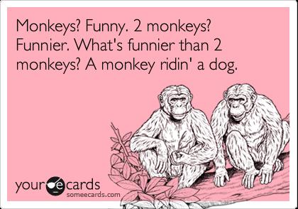 Monkeys? Funny. 2 monkeys? Funnier. What's funnier than 2 monkeys? A monkey ridin' a dog.